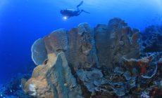 Permalink ke Bawah Laut Bolsel, Indah Bagi Penyelam, Terdapat 22 Spot