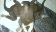 Permalink ke Heboh… Anjing Lahir Berkaki Delapan di Desa Silian