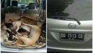 Permalink ke Jelang Pengucapan, Aksi Doger Anjing Mulai Marak di Minsel