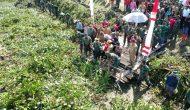 Permalink ke Panglima TNI Utus Jendral Bintang Dua Angkat Enceng Gondok
