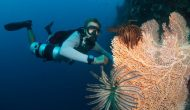 Permalink ke Amazing… SiladenResort Diving Terbaik Dunia