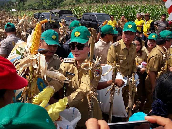 Permalink ke Menuju Swasembada Jagung 2017, Bupati Minsel Panen Perdana dan Tanam Jagung di Desa Tewasen
