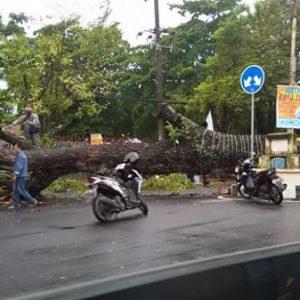 Permalink ke Cuaca Ekstrim, Sejumlah Pohon di Manado Tumbang