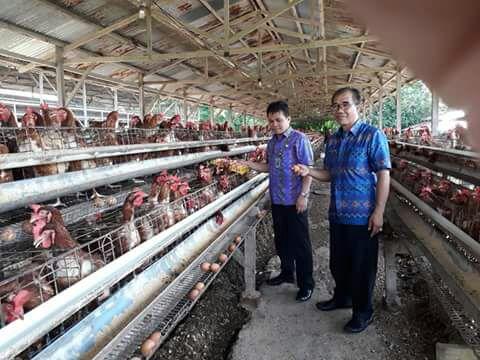 Permalink ke Kepala Dinas DPKP Manado Berkunjung Ke Peternakan Unggas Petelur Di Kecamatan Mapanget