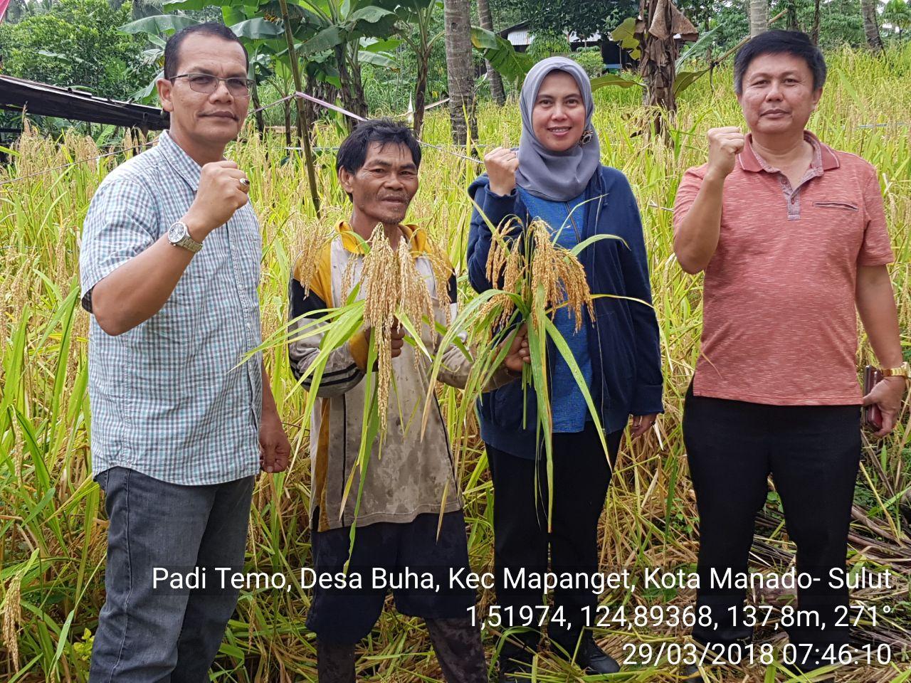 Permalink ke Direktur Serealia Kementan RI Ir Ali Jamal Kunjungi Lokasi Penanaman Padi Ladang Di Mapanget