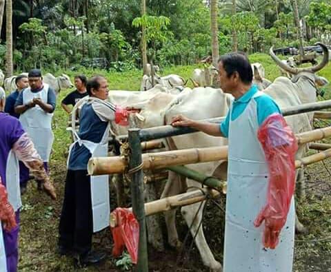 Permalink ke Dorong Ternak Sapi, DPKP Manado Mantapkan UPSUS SIWAB