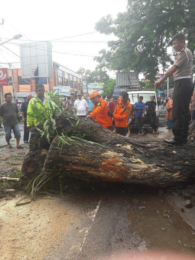 Permalink ke Pohon Tumbang Di Pusat Kota Airmadidi Tutupi Ruas Jalan Utama