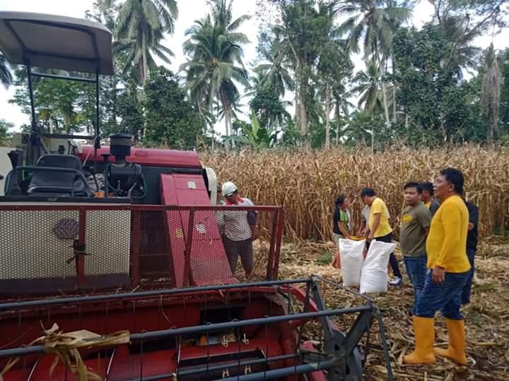 Permalink ke Panen Jagung di Desa Mopolo, Kadis Pertanian Minsel Kukuhkan 3 Koptan