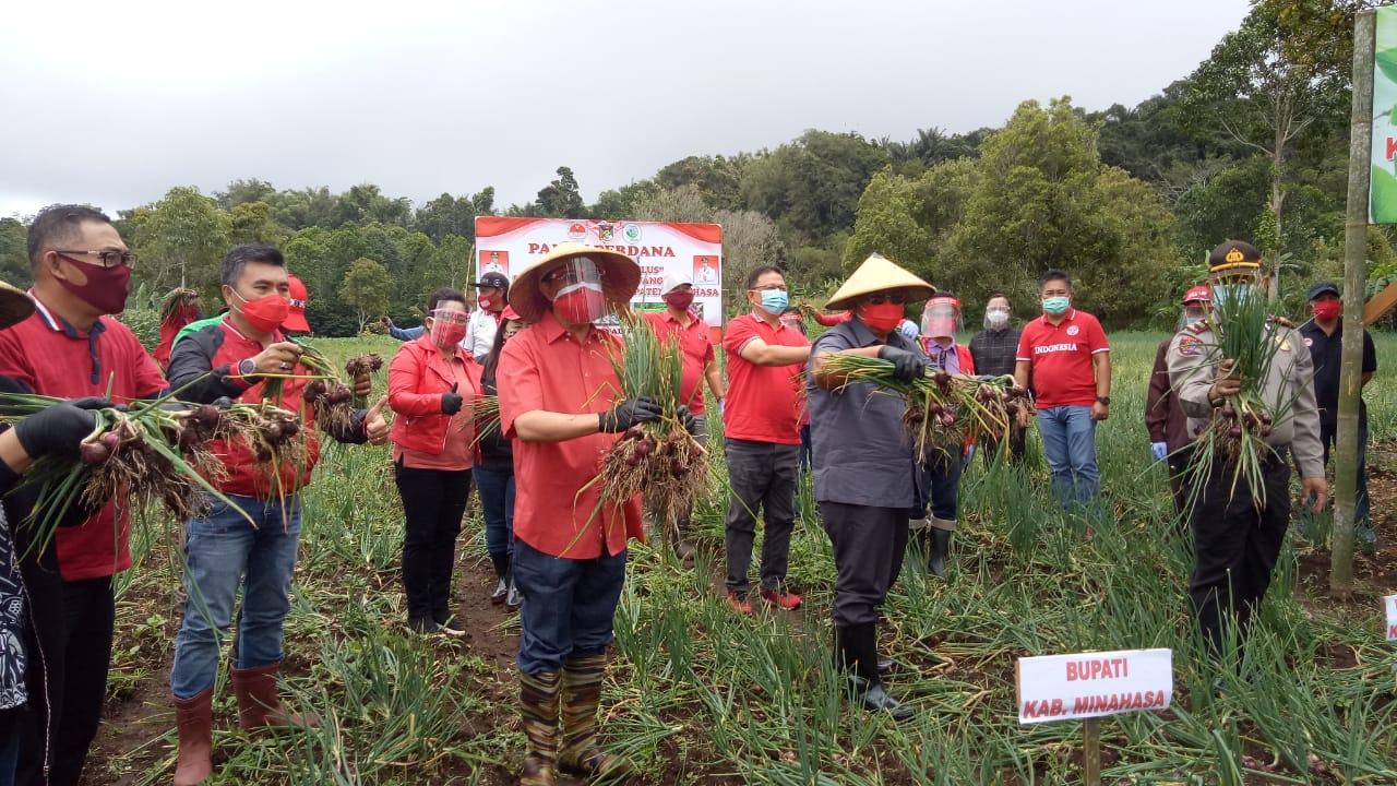 Permalink ke Bupati, Ketua KTNA dan HKTI Kabupaten Minahasa Panen Bawang Merah di Kawangkoan