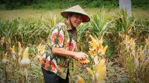 Permalink ke Terus Tingkatkan Produksi Pertanian, Wagub Salurkan Bantuan Benih ke Petani